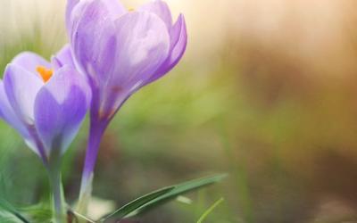 Das Frühjahr streckt seine Fühler aus