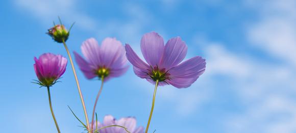 Frühlingsblauer Himmel über allem, was lebt
