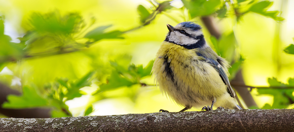 Das Lied der Vögel